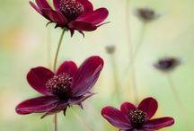 Garden Things / by Nichole Shaffner