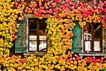 Adventures in Autumn / The best places on Earth to watch the leaves change / by The Seeker Wines
