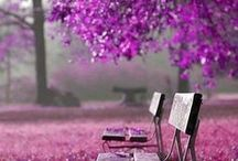 Color:  Purple..... / Anything & everything purple.....so beautiful. / by Arlene Larson