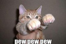 Cats + Kittens =Cutness / by Erin Duke Johnson