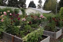 How does my garden grow 2012 / My garden almanac for 2012 / by Shelley Robillard