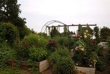 How does my garden grow 2013 / My garden almanac for 2013. / by Shelley Robillard