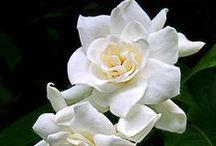 Incredibly Beautiful Flowers and Mushrooms / by Kitty Poshepny-Johnson