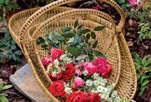 Bountiful Baskets~✿⊱╮ / by The Baglady