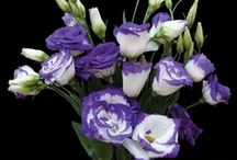 and the winner is.......Lisianthus / by Ann Erler