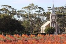Barossa Vineyards / by Barossa Dirt