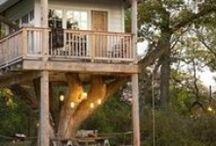 tree houses / by Laura Berry