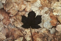 Fall home / by Katie Convertino