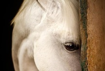 I'm a Horse, a Horse, of course, of course... / by L Li