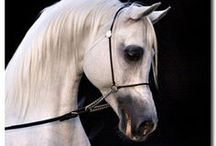 A Horse, Of Course! / Beautiful horses! / by Megan Noble