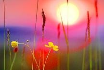 Sunsets & Sunrises / by Debra Bell