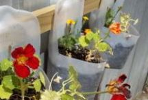 THings to make Repurpose or Recycle / Using plastic bottles to make into something new, repurposing something old into something new / by Linda VanSyckle