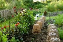 Allotment 18A / by namolio