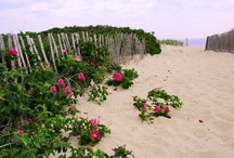 cape cod & the islands  / by Susan Hellman