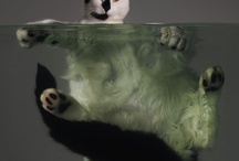 Animals / by Carole Dugelay
