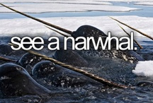 Narwhals, narwhals, swimming in the ocean / by Reed Hooke