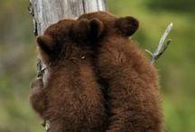 Bears Bears & Bears / by nikki