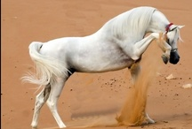 Equestrian / by Tiffany Stayer