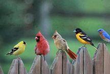 Bird Houses & Wind Chimes / by Shawna Traba