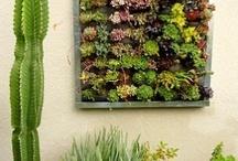 Garden & Outdoors / by Julia Z