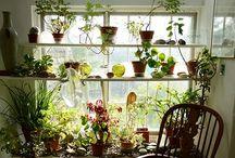 Indoor Eden / by Dayna McPherson