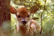 Deery Me / For the magical creature of the forest. / by The Woodsfolk & Down To The Woods