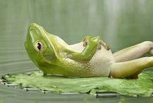 Reptilian & Amphibian / by Pj Martin