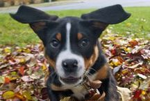 Dogs Love Leaves / by Jody Murphy | Dog Walker & Visual Marketing Pro