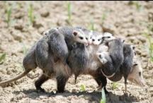 Motherhood / by Carrie Chapman