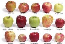 •apples• / by {shanda}