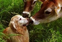 I Love Cows :-) / by Christina Warren
