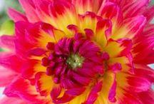 flower power / by Alyssa Milazzo