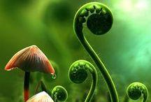 Nature is the best designer / by plexus solaris
