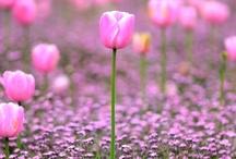 Gardens & Flowers / by Laurel LaManna -Koenigsberg