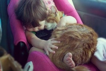 here kitty kitty ... / by Stephanie Kress