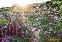 { Cottage Garden } / by Kirsten Ivors