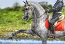 Historic Horse Costumes / by ilovehorses.net
