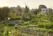 { Kitchen Garden } / by Kirsten Ivors