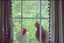 { Chickens } / by Kirsten Ivors