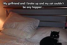 Funny / by Erin Santorella