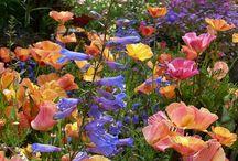 Gardening / by Nancy Hughes