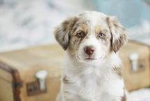 Pets / Animals / by Victoria Regan