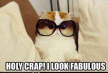 stupid animal stuff that I think is funny b/c i'm a dork... / by Amanda Van Buskirk