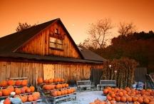 Autumn / by Vicky Logan