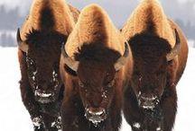 Exotic Animals / by Karen Albritton