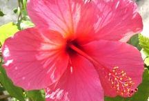 Flower Power / The best flowers found in our lush gardens in #Mauritius, #ReunionIsland and the #Maldives, and around the world! www.luxresorts.com / by LUX* Resorts & Hotels