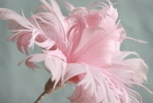 Tickled Pink / by Dianne Oler