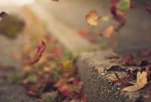 {Fall} / by Crystal Sadler