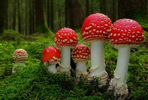 mushrooms / by Shelia Scherer