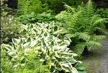 Shade Plants / by Paige Spink